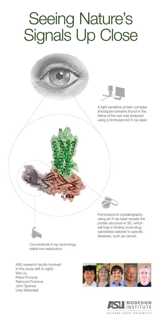 ASU Rhodopsin_infographic_0723